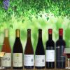 Georgian wine tasting package Premium | Ghvino.shop